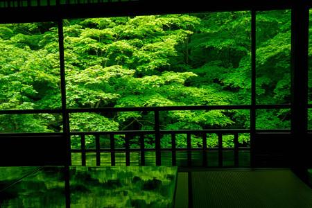 瑠璃光院 新緑3