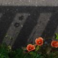 写真: 花と影