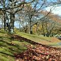 Photos: サクラの木々の散策路