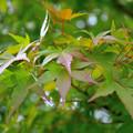 写真: 秋へ