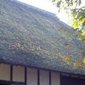 Photos: 茅葺屋根