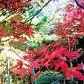 201121 大雄山最乗寺
