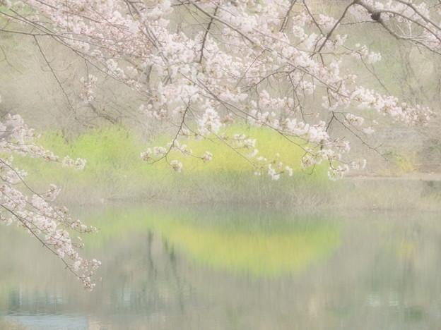 Photos: 淡い春色