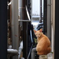 Photos: 路地裏のネコちゃん