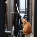 路地裏のネコちゃん