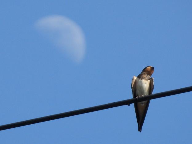 月とつばめ