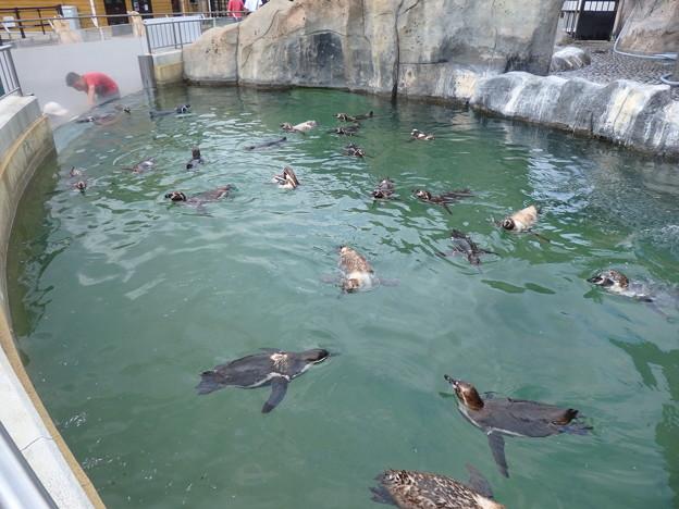 ただ、ペンギンがプカプカ浮いてる風景