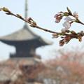 写真: 春の風景1