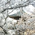 お寺の春2