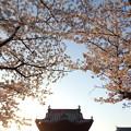 写真: お寺の春3