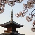 写真: お寺の春4