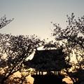 桜と鐘の音