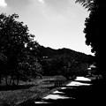 写真: 夏の小道