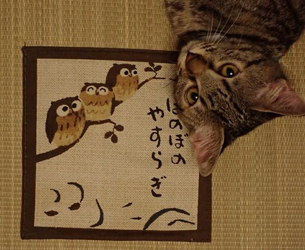 Photos: ほのぼのやすらぎ3