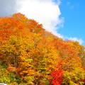 Photos: 金の山