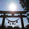 Photos: ニッコリ鳥居