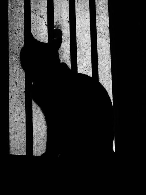 Photos: 猫1