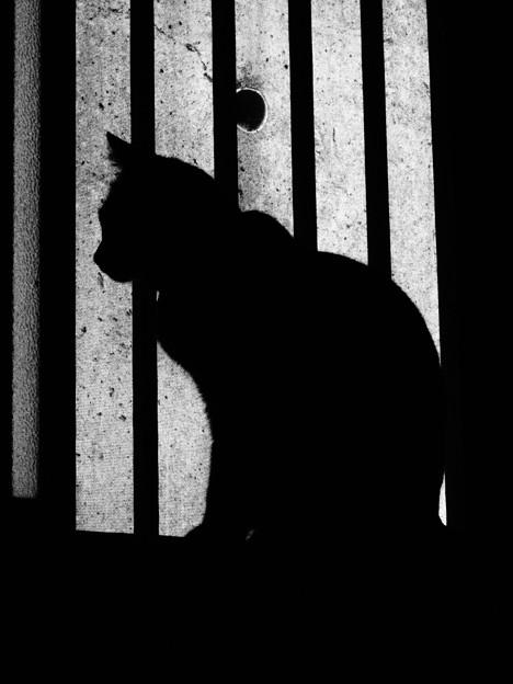 Photos: 猫2