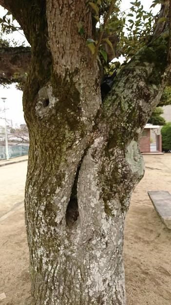 ムンクのあれっぽい木