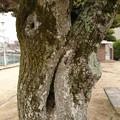 Photos: ムンクのあれっぽい木
