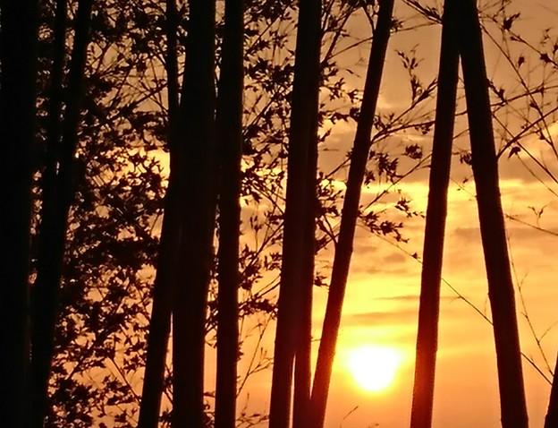 竹林の夕焼け