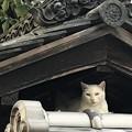 Photos: 猫屋敷