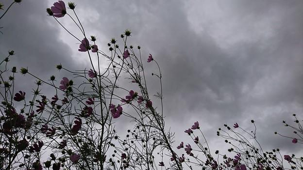 Photos: 台風19号