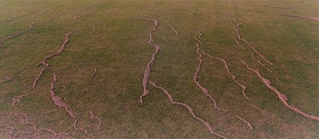 Photos: 芝生の模様