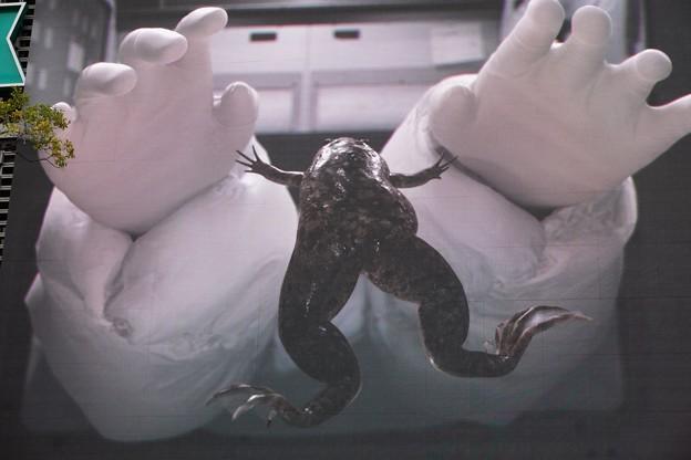 Photos: カエル宇宙へ行く