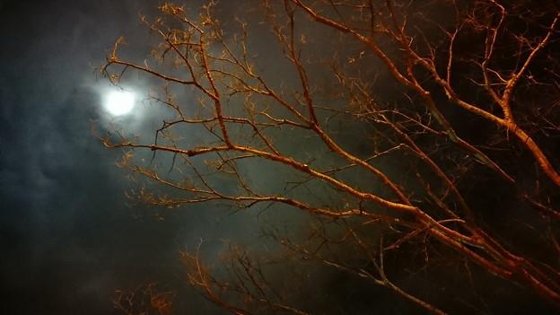Photos: 赤い枝
