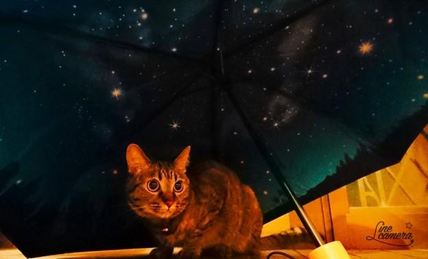 雨上がりの夜空
