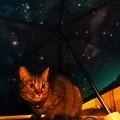 Photos: 雨上がりの夜空
