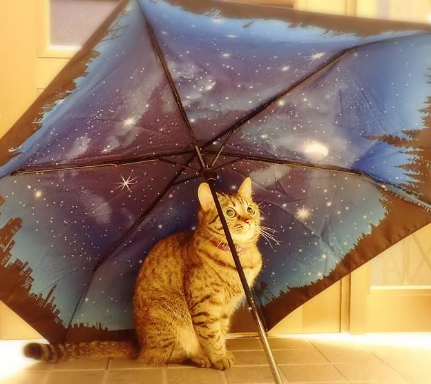 雨上がりの星空 2