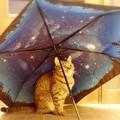 Photos: 雨上がりの星空 2