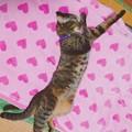 Photos: ベルの盆踊り2