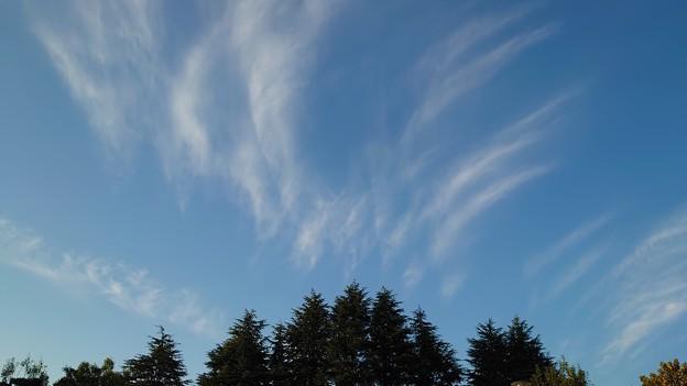 Photos: 風が吹く
