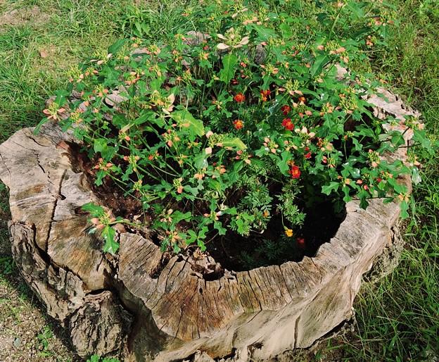 年月を刻んだ植木鉢