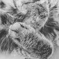 Photos: ベルの手