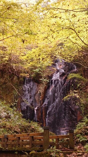 滝(秋の姿)