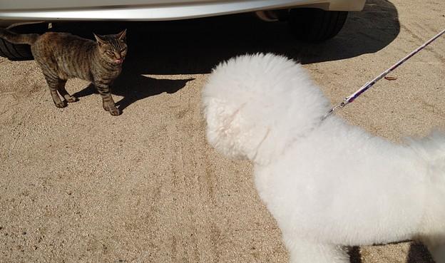 野良猫、おもちに遭遇する