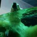 写真: ココ、泳ぐ!!