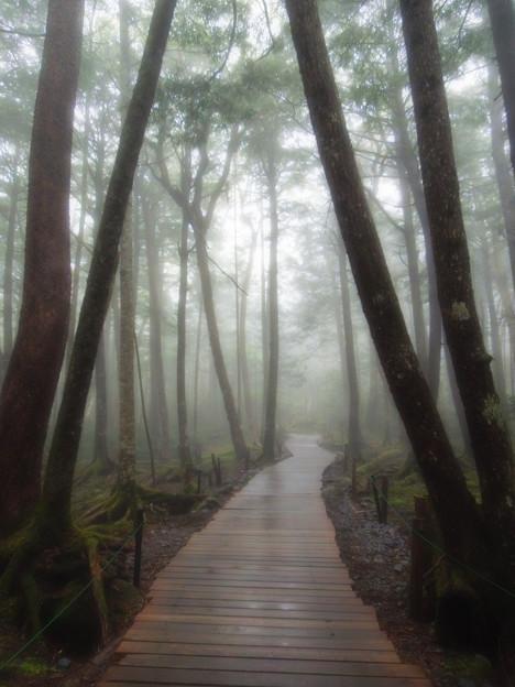 白駒の森にて