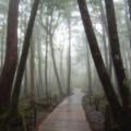 Photos: 白駒の森にて