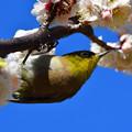 Photos: 春近し