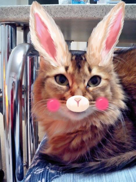 2018-04-17-火-作成-CA260021-ウサギのプリンちゃん