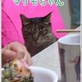 Photos: 2020-03-14-Sat-04-Marimo-the-same-day-in-2011_CIMG7318