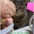 Photos: 2020-03-14-Sat-05-Marimo-the-same-day-in-2011_CIMG7319