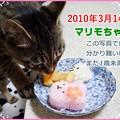 Photos: 2020-03-14-Sat-06-Marimo-the-same-day-in-2010_CIMG5011