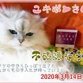 Photos: 2020-03-14-Sat-07-Yukipon-the-same-day-in-2020_DSCN8889