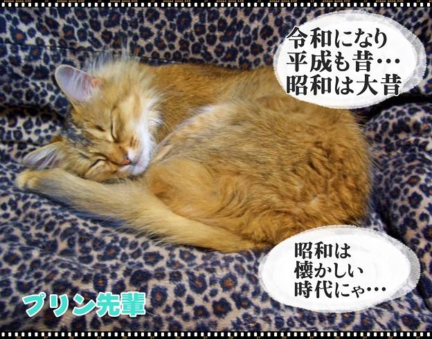 Photos: 2020-03-16-Mon-01-Purin-chan-Dreaming_CIMG0820